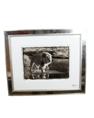 Jamie Thom Mirror Framed Photograph of a Lion