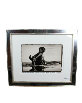 Jamie Thom Mirror Framed Photograph of a Hippo