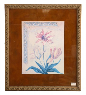 NIcely Framed Print of an Exotic Mapasi